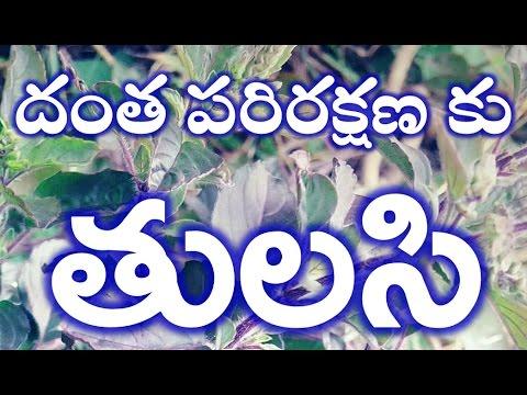 health tips in telugu|దంత పరిరక్షణ లో తులసి-నోటి దుర్వాసన పోవాలంటే |holy basil-dental care|tulasi