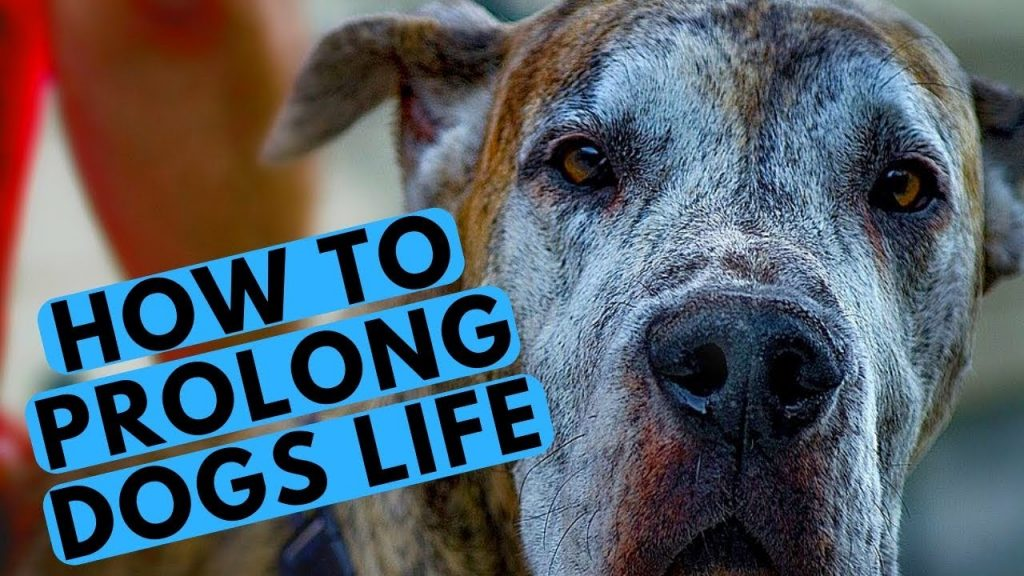 TOP 10 Tips to Make Your Dog Live Longer