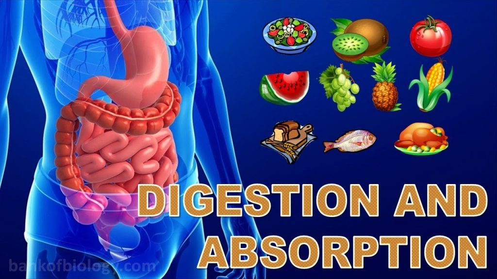 Digestion n absorption – Part 1 Alimentary canal up to Teeth
