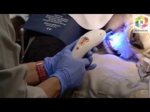 Panda gets teeth checked at Zoo in USA