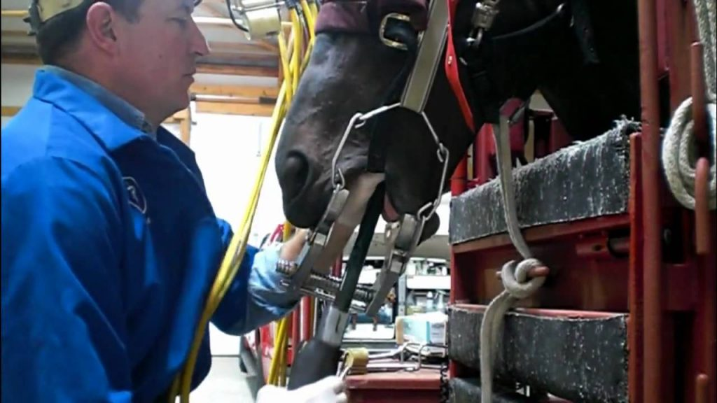 Dr. Mark Bianchi – Equine Tooth Floating