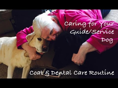 Caring for Your Guide/Service Dog: Daily Grooming, Fur, & Dental Care Routine